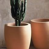 Ravel-cactus