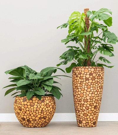 Bac de plantes Pistil