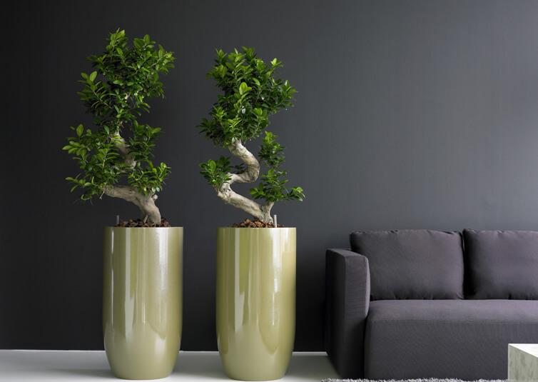 Bacs de plantes duo