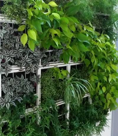 Végétation verticale Pistil